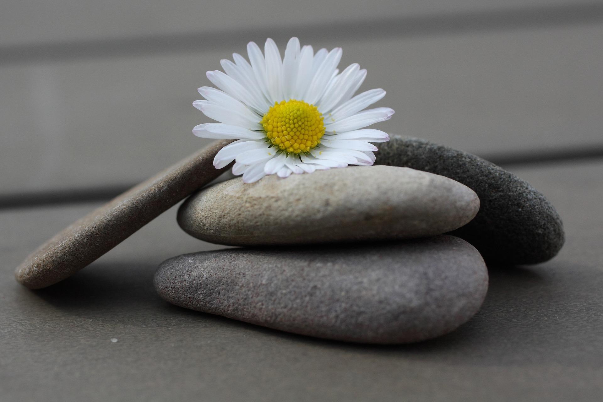 Steine des Lebens